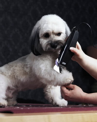 GROOMING AT HOME